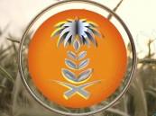المؤسسة العامة للحبوب تتولى إدارة برنامج استيراد الشعير مطلع العام القادم