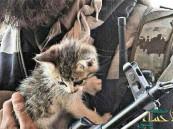 """""""داعش"""" يشن حملة لتخليص العالم من القطط !"""