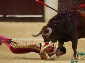 """إسبانيا تُعيد """"مصارعة الثيران"""" بعد حظرها.. ونشطاء """"الرفق بالحيوان"""" ينظمون """"يوم غضب"""""""