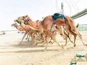 الأخضر للهجن يصل إلي أبو ظبي وينافس الأربعاء القادم على ميدان الوثبة
