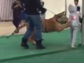 بالفيديو .. نمر يهاجم طفلة في سكاكا