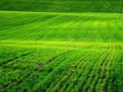 دولة تعرض أراضي زراعية مجانية للمواطنين السعوديين !!