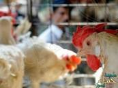 وزارة البيئة والمياه والزراعة تكشف حقيقة ظهور أنفلونزا الطيور بمناطق المملكة