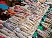 أسعار الأسماك سترتفع 40% في الفترة القادمة .. تعرّف على السبب!!