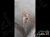 فيديو مؤثر لكلبة جائعة ترفض تناول الطعام وتقدمه لصغارها
