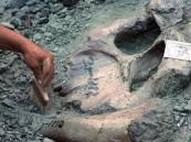 """لأول مرة.. حفريات تكشف عن """"ديناصور"""" بلا أسنان!!"""