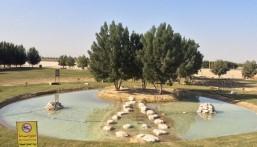 """بالصور…  بحيرة للسمك """"البلطي"""" و""""السلاحف"""" على مساحة 1500 متر² بالعقير"""