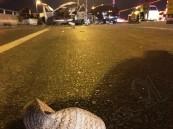 """بالصور الخاصة.. حادث الخمس سيارات يشطر """"الداتسون"""" نصفين ويُصرع قائدها!!"""