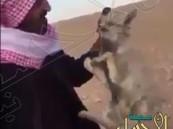 شاهد.. مقطع يوثق تجمّد الحيوانات بسبب شدة البرد شمال المملكة