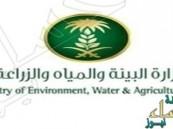 السعودية تجري دراسة لتكاليف المياه لتشجيع الاستثمار في القطاع