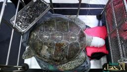 """السلحفاة """"الحصالة"""" تدخل في غيبوبة بعد استخراج 915 عملة معدنية من بطنها !"""