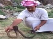 شاهد.. شاب يصطاد كوبرا في أحد السهول.. ويحذر المواطنين من موسم خروج الثعابين