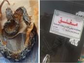 بالصور.. مواطن يفاجأ بثعبان داخل وجبة دجاج مندي بأحد مطاعم عسير