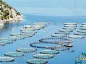 تمشيط 2400 كلم بحثاً عن مواقع الاستزراع السمكي في المملكة