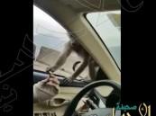 شاهد… رد فعل قرد حاول شاب الإمساك به في الطائف !!