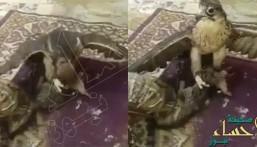 شاهد.. فيديو مؤلم لصقر يلتهم قطة حية وصاحبها يكتفي بالتصوير!!