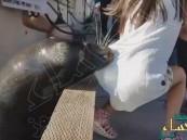 فيديو مرعب… أسد البحر يختطف طفلة ويهرب بها تحت الماء