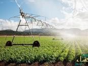 """""""الزراعة"""": تعويض المزارعين الأربعاء المقبل"""