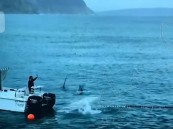 بالفيديو … سباق مدهش بين سباح عالمي وقرش أبيض