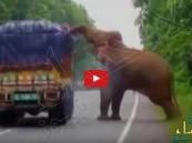 شاهد… فيل جائع يوقف شاحنة خضروات على الطريق ليأكل من حمولتها !!