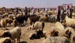 وصول 5.3 مليون رأس من الماشية الحية للمملكة