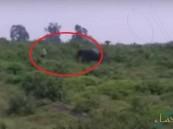 """بالفيديو… نهاية مأساوية لرجل حاول التقاط """"سيلفي مع فيل""""!"""