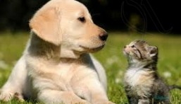 مشفى يستخدم الحيوانات في علاج المرضى