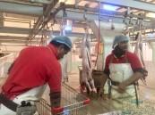 """بالصور… الفَوضَّى و""""البخشيش"""" يُسيران العاملين في مسلخ الأحساء المركزي !!!"""