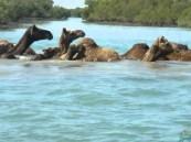 """رغم عمق المياه .. مقطع يوثق """"جمال"""" تسبح بمهارة في مياه البحر !!"""