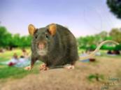 شاهد بالفيديو… جحور الفئران تَمْلَأُ عدة مواقع بأحد المتنزهات الكبرى في الأحساء !!