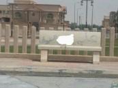 """بالصور.. مقاعد """"العبارات الخادشة"""" تثير استياء الأهالي والبلدية لم تحرك ساكن!!"""