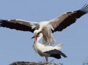 بعد وصوله السودان.. طائر يتسبب بفاتورة هاتفية باهظة !!