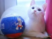 القط الروسي أيقونة توقع نتائج مباريات كأس العالم