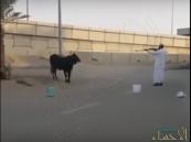 """استياء واسع من فيديو يوثِّق استخدام عماني لـ """"الرصاص"""" في ذبح البهائم"""