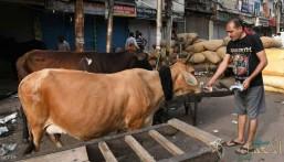 "مقتل هندي ضربا.. والتهمة ""تهريب أبقار"""