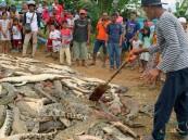 انتقاما لمقتل مواطن.. قرويون في إندونيسيا يقيمون مذبحة للتماسيح !!
