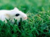 355 دولاراً مُقابل… عضة فأر!