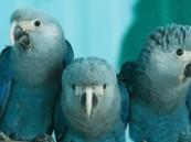 تعرّف عليها … 8 طيور انقرضت في زمن قياسي!!