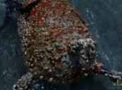 العثور على ألغام بحرية زرعها الحوثيون في البحر الأحمر