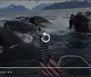 """بالصدفة البحتة.. كاميرا ترصد """"مشهدا مهيبا"""" بقلب المحيط !!"""