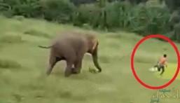 بالفيديو.. استفزاز فيلة ينتهي بمصرع طفل تحت أقدامهم !!
