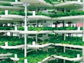 دبي تبدأ في نوفمبر إنشاء أكبر مزرعة رأسية في العالم