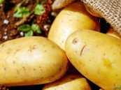 """المشكلة ليست في البطاطس.. إنها في طرق التحضير """"المدمرة"""""""