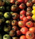 """طماطم بألوان مختلفة.. """"البيئة"""" تكشف حقيقة وجود مبيدات أو هرمونات سامة بها !!"""