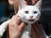 نصيحة لمن يربون الحيوانات بالبيوت: احذروا أمراضا قاتلة
