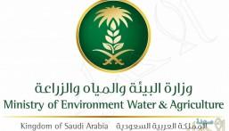 93 شاغر وظيفي.. بوزارة البيئة والزراعة والمياه