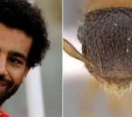 """""""عالم حشرات"""" بجامعة سعودية يُكرّم """"صلاح"""" بطريقة غريبة !!"""