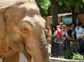 """بعد 43 عاما من """"العذاب"""".. نفوق الفيل الأكثر بؤسًا في العالم !!"""