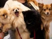"""علماء يحذرون من """"إنفلونزا الكلاب"""" المميتة !!"""