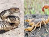 تحذير عام من لدغات العقارب والثعابين خلال هذه الفترة